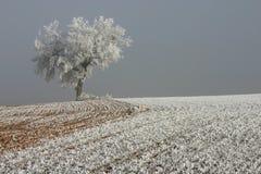 Alone tree royalty free stock photos