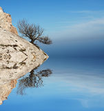 Alone tree. On stone and lakes reflection Stock Image