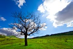 Alone tree Stock Image