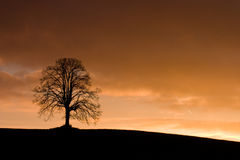 Alone tree. In field at dark Royalty Free Stock Photo