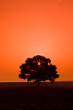 Alone tree. On the field in sunset Royalty Free Stock Photo