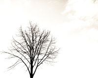 Alone tree. Tree in white sky background Royalty Free Stock Photography