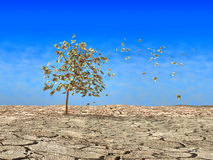 Alone tree Stock Photos