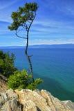 Alone tree. On rocky coast, lake Baikal Royalty Free Stock Photos