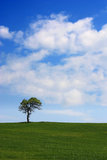 Alone tree Royalty Free Stock Photography