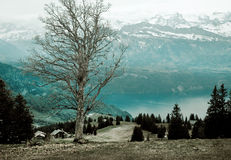 Alone tree in Alps Royalty Free Stock Photos