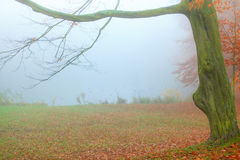 Alone tree in autumn park. Royalty Free Stock Photography