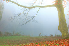 Alone tree in autumn park. Royalty Free Stock Photo