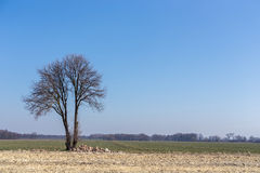 Alone tree. On the big large field Stock Photography