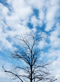 Alone tree. Alone tree and blue sky royalty free stock images
