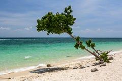 Alone tree on the coastline of Poda island in Krabi royalty free stock images