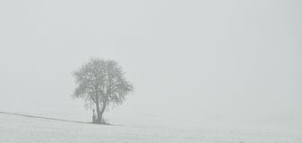 Alone in nature. A tree and cross on a white field royalty free stock images