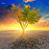 Alone tree in a desert Stock Photos