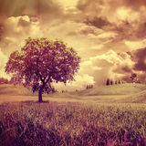 Alone tree. Dramatic surreal landscape for your design Stock Photography