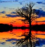 Alone tree in dusk. Near lake shore Stock Image