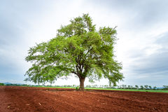 Alone tree. On farm,country landscape Stock Photos