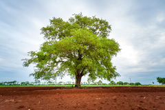 Alone tree. On farm,country landscape Stock Image