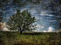 Alone tree on field. Royalty Free Stock Photos