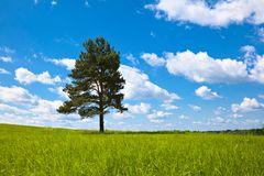 Alone tree in field Stock Image