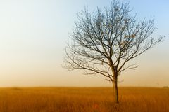 Alone tree on the field,in autumn Royalty Free Stock Photos