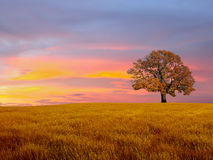 Alone tree in the field. With clouds Royalty Free Stock Images