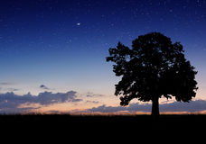 Alone tree in the field Royalty Free Stock Photography
