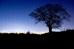 Alone tree. In the field at night Stock Photos