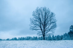 Alone tree on the field Royalty Free Stock Photography