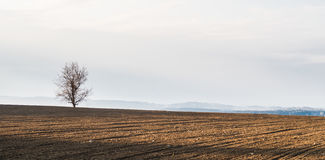 Alone tree in a field Stock Image