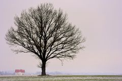 Alone tree in a field . Winter season. Royalty Free Stock Photos