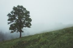Alone tree in the fog. Beautiful Carpathian mountains in summer time, Ukraine, Europe Royalty Free Stock Photo