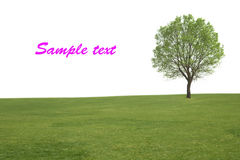 Alone tree and grass Stock Image