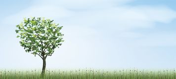 Alone tree in green field area with blue sky and clouds backgrou. Nd. Outdoor natural abstract background. Use for natural article both on print and website Royalty Free Stock Images