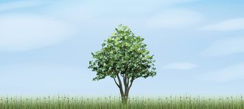 Alone tree in green field area with blue sky and clouds background. Outdoor natural abstract background. Use for natural article both on print and website Stock Photos