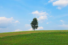 Alone tree on green meadow Royalty Free Stock Photos
