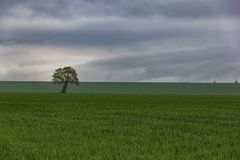 Alone tree. On green meadow and cloudy blue sky Stock Photos
