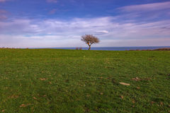 Alone tree. On green meadow and cloudy blue sky Stock Photography