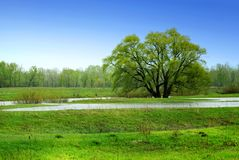 Alone tree and green meadow in water Stock Photos