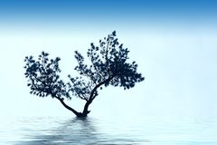 Alone tree grow Royalty Free Stock Images