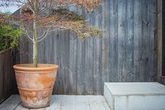 Alone tree growth in clay flowerpot place on wooden terrace for decorative gardening. Selective focus stock photos