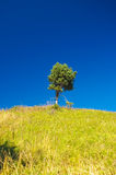 Alone tree. On a hill Stock Photo