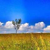 Alone tree in HDR Stock Photos