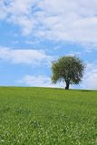 Alone Tree In The Field Stock Photography