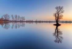 Alone tree in lake with color sky Stock Photography