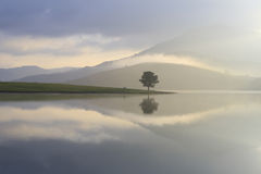 Alone tree in lake Royalty Free Stock Images