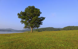 Alone tree in lake. Alone  pine tree in lake Royalty Free Stock Photo