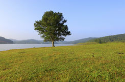 Alone tree in lake. Alone  pine tree in lake Stock Photo