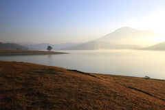 Alone tree in lake in sunny day Royalty Free Stock Images