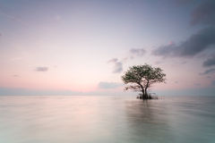 Alone tree. On lake with sunrise stock photos