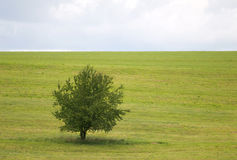 Alone tree on meadow Royalty Free Stock Image